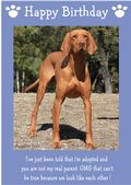 "Hungarian Vizsla-Happy Birthday - ""I'm Adopted"" Theme"